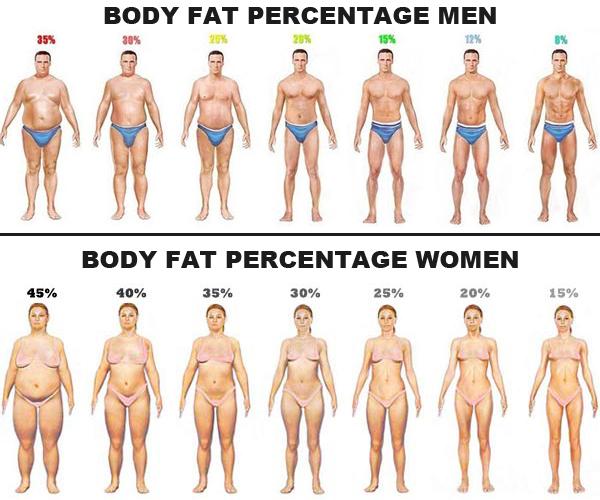 Beregn og udregn din fedtprocent med forskellige formler